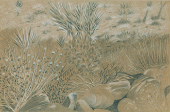 Joshua Tree Drawing 1