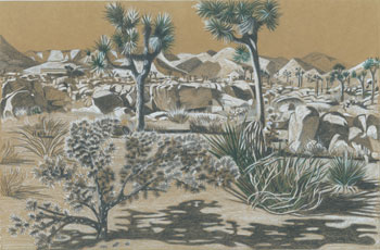 Joshua Tree Drawing 4