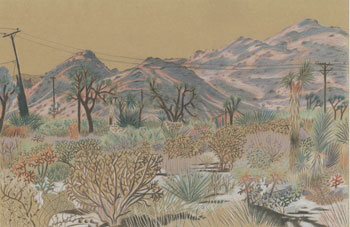 Joshua Tree Drawing 8